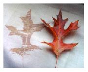 hapa zome leaf print nature art