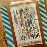 feather-studies-cover.jpg_2D00_500x375.jpg